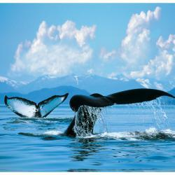 From $959 7-days Inside Passage (with Tracy Arm Fjord) Roundtrip from Seattle, Washington
