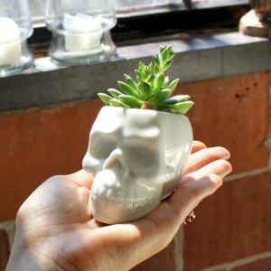Skull Planter Ceramic Skulls for Succulents
