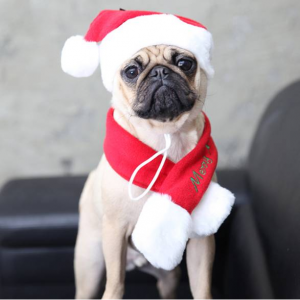 메리크리스마스 퍼피아 산타 모자 목도리