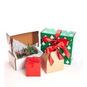 """Shop Succulents Unique Succulent Gift Box 2"""", Pack of 12"""