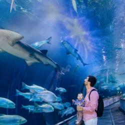 Up to 24% off Admission for One Child or Adult to Aquarium of the Bay