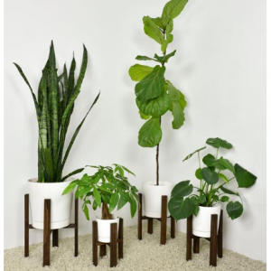 Modern Wooden Plant Stand with Pot: Multiple Sizes and Colors Available, Free Shipping to United S