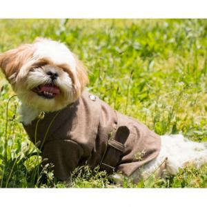 Pet Life Galore 100% Cotton Wool Back-Buckled Dog Coat