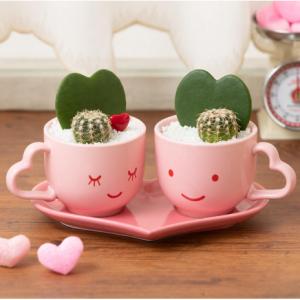 観葉植物「LOVER'S Valentine」