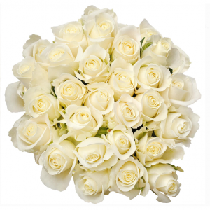 "Natural Fresh Flowers - White Roses, 20"", 75 Stems"