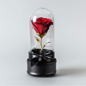 Live Preserved Musical Rose