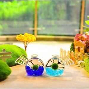 Marimo Angel Aquarium Kit (Set of 2)