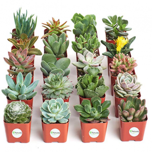 Save up to 30% on select Shop Succulents @Amazon