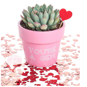 Shop Succulents You're a Gem Valentine's Day Terracotta Planter-Includes Free Crystal-Gift for Her