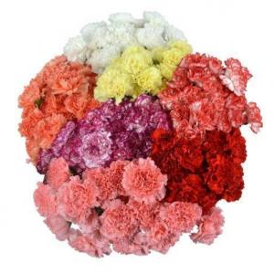 350 Carnation Flower Assorted