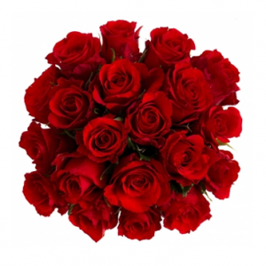 100 Red Roses Wholesale Bulk