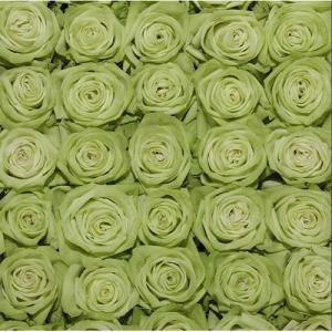100 Light Green Roses