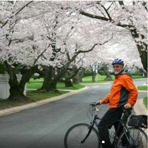 Viator Exclusive: Cherry Blossom Bike Tour in Washington DC