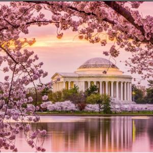 TripAdvisor Offer  - 2019 National Cherry Blossom Festival tickets on sale