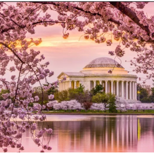 Hotels.com offer - Cherry Blossom Hotel with up to 40% OFF