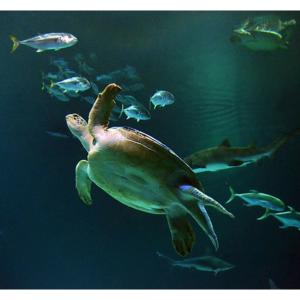 Vegas.com - 拉斯维加斯鲨鱼礁水族馆门票$20起