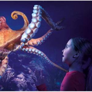 BestOfOrlando - Sea Life Orlando Tickets Sale