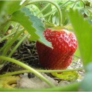 Lewin Farms - 纽约夏秋季水果蔬菜采摘