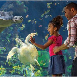 SeaWorld Gold Annual Pass e-ticket for $94.99 @Costco
