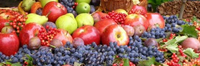 2019合肥全年水果采摘时间表 - 周边最佳摘水果地点推荐(附价格+交通路线)